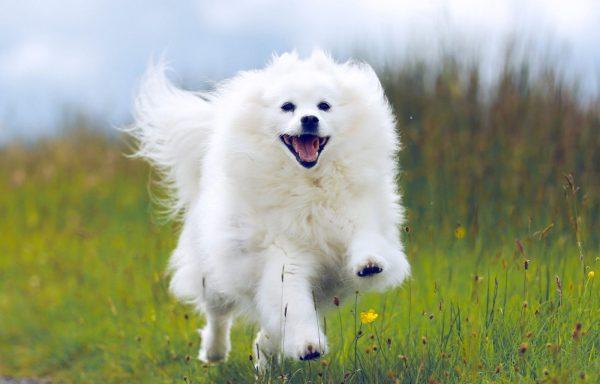 ally running pet photoshoot