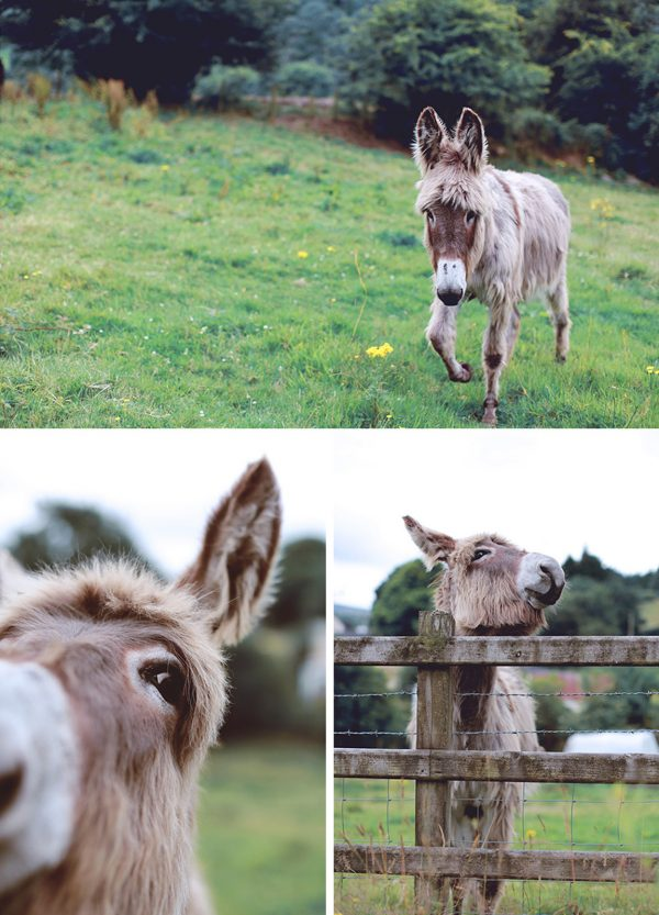 donkey animal photography northern ireland